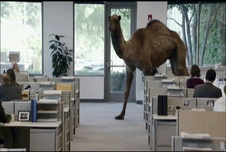 Your Daily TV Spirit Animal: Geico Camel