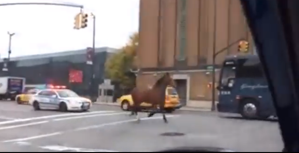 Carriage Horse Flees Through Hell's Kitchen