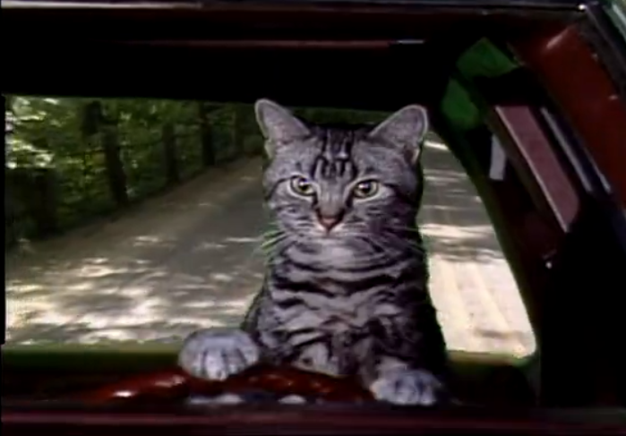 Your Daily TV Spirit Animal: Toonces, the Driving Cat
