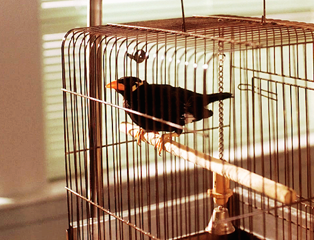 Your Daily TV Spirit Animal: Waldo the Myna Bird From 'Twin Peaks'