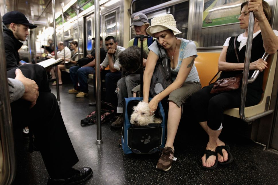 Afternoon Bulletin: The Subway Is Teeming with Unidentifiable Organisms and More