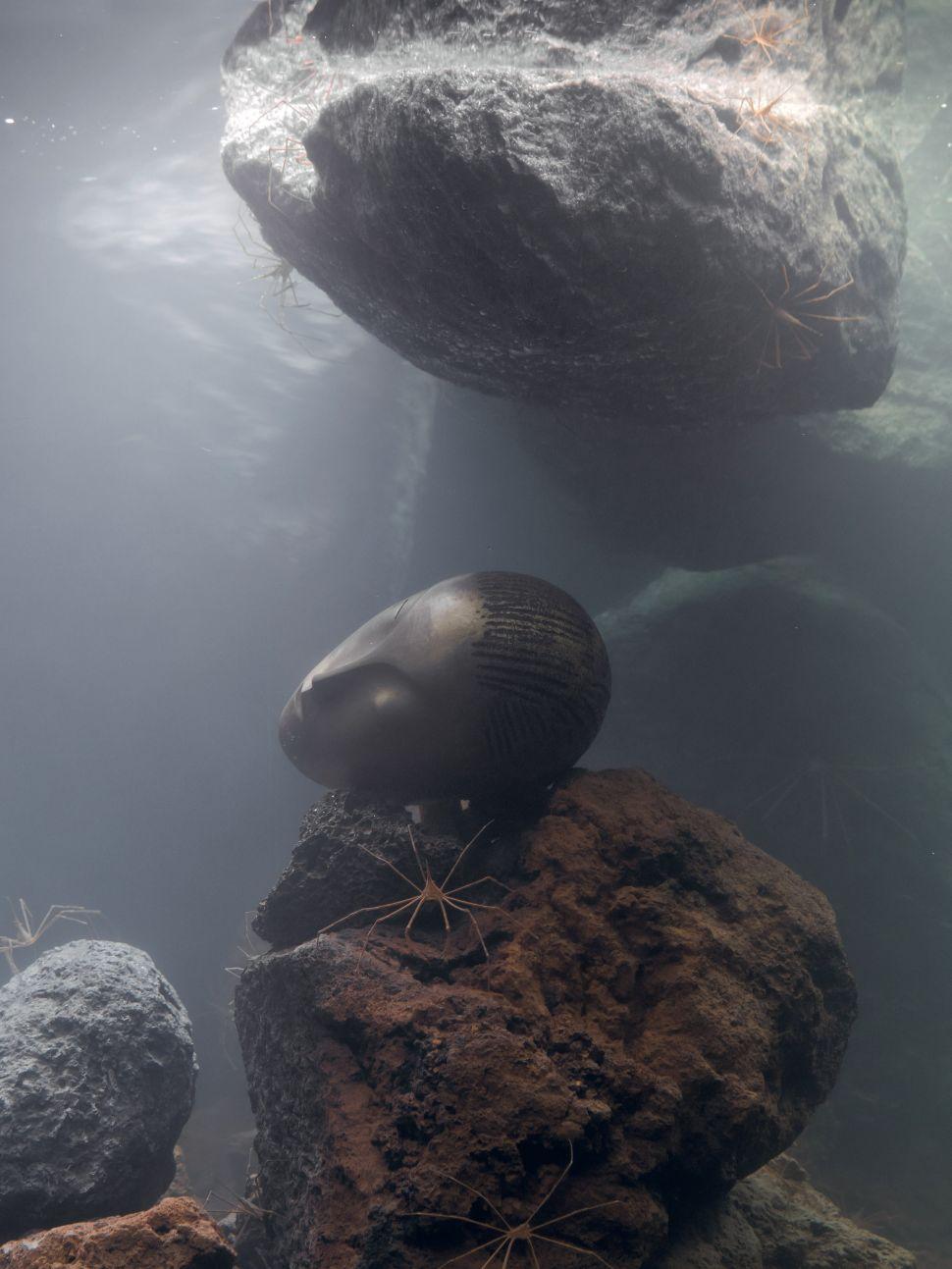 Art as Biosphere: A Walk Through Pierre Huyghe's LACMA Survey