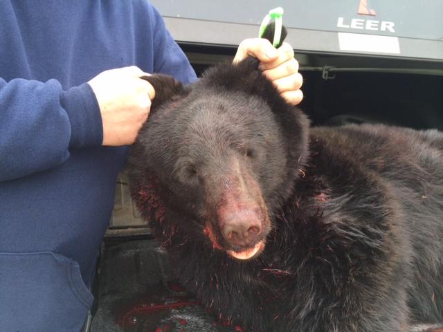 N.J. bear hunt shotguns emotions into hunters, protesters alike