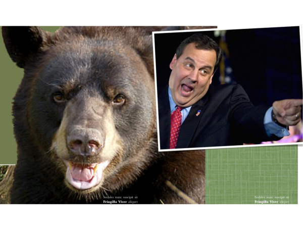 Huge Grizzly Bear Briefly Mistaken for Governor Christie in Sussex County Gets into growling match with teacher at school meeting