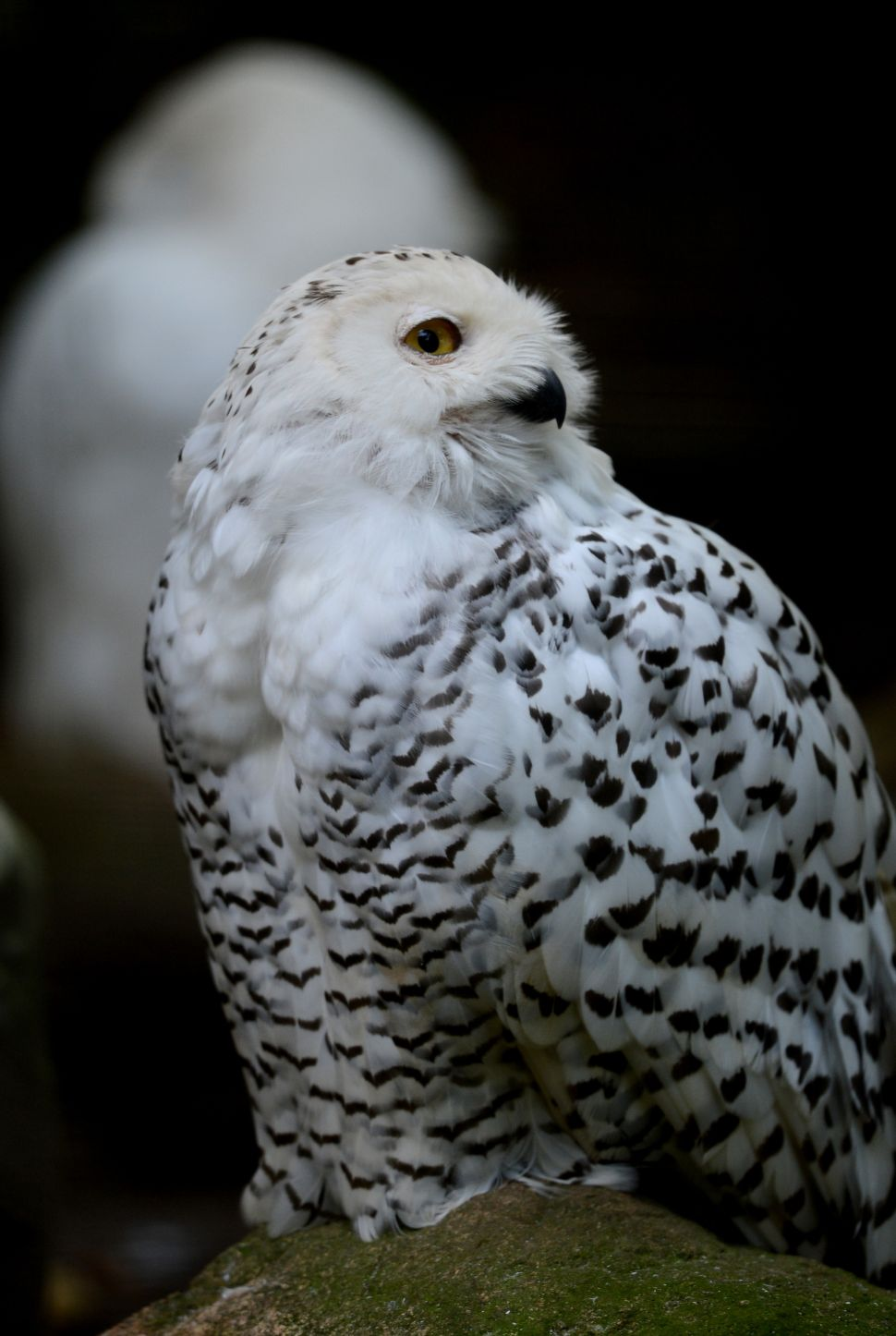 Afternoon Bulletin: Arctic Owls Descend Upon New York and More
