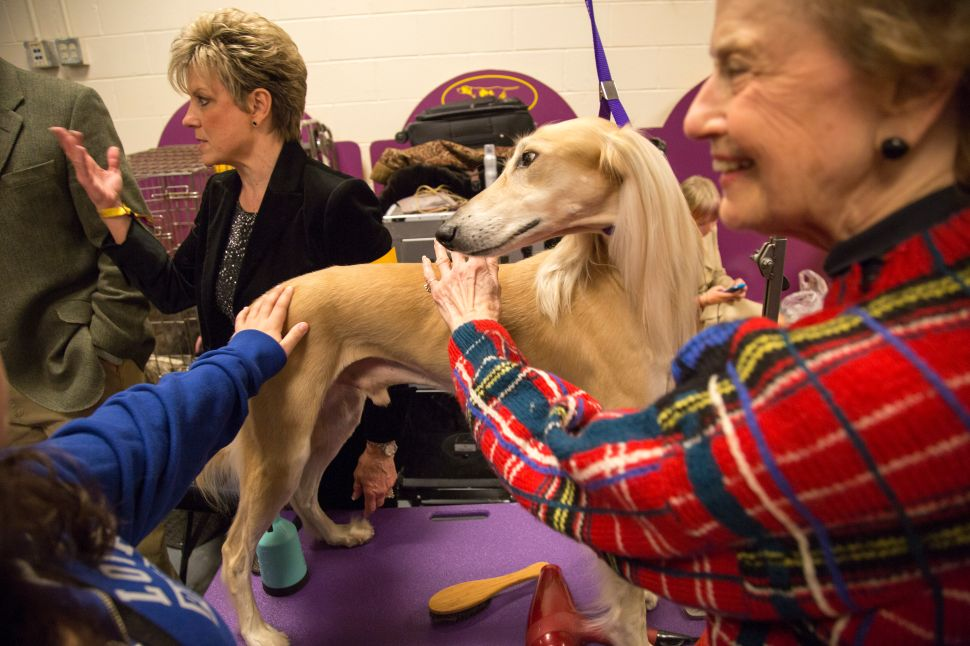 Dog Day Afternoon: Pets Become Masters at 139th Westminster Kennel Club Dog Show