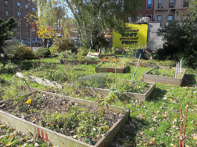 New Yorkers Protest City Plan to Destroy Community Gardens