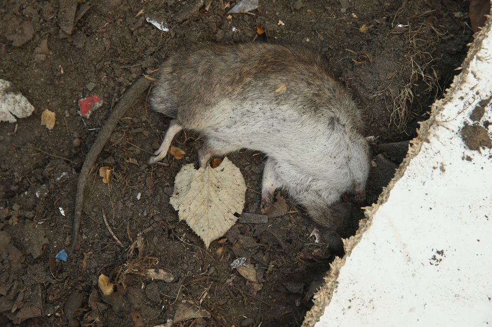 Probe Finds 'Serious Deficiencies'—And Dead Rats—at Homeless Shelters