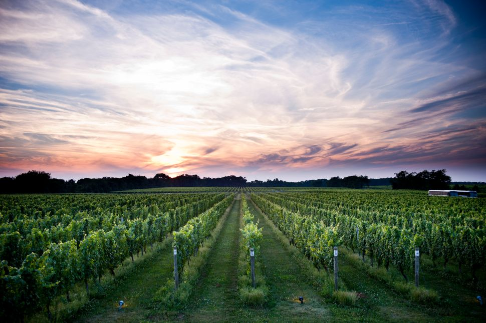 Liquid Assets: Wine Entrepreneurs Share Their Vintage Secrets