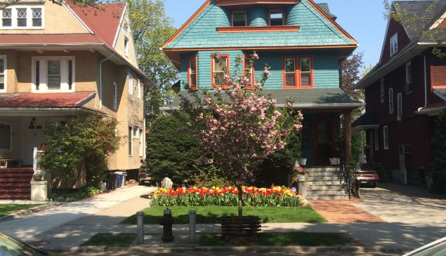 Plenty of places for tulips to bloom in Ditmas. (Faye Penn.)