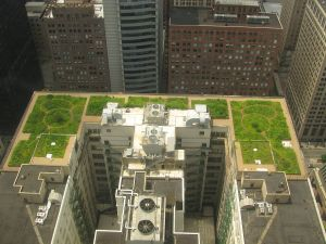 Will green roofs like the one on Chicago's City Hall be a technology that Sidewalk Labs works to advance? (Photo: TonyTheTiger/WikiCommons)