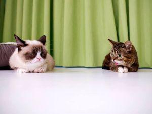 Grumpy Cat and Lil Bub. ( Photo: Flickr/AdamRifkin)