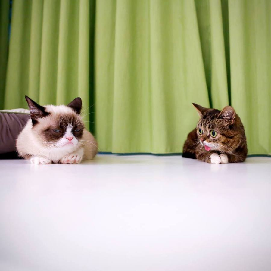 'Tape a Gecko to Your Head' and More Tips for Photographing Cats for Internet Fame