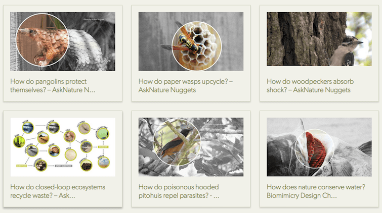 AskNature Helps Solve Design Challenges with Natural Phenomena