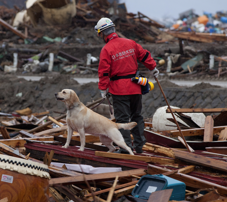 The Eight-Day Week: Play 'Aftermath' Supports National Disaster Search Dogs