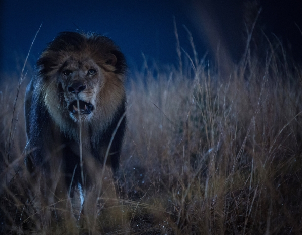 'Zoo' Showrunner on Adapting James Patterson's Man v Animal Story