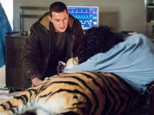 Tiger, tiger burning bright... (NBC)