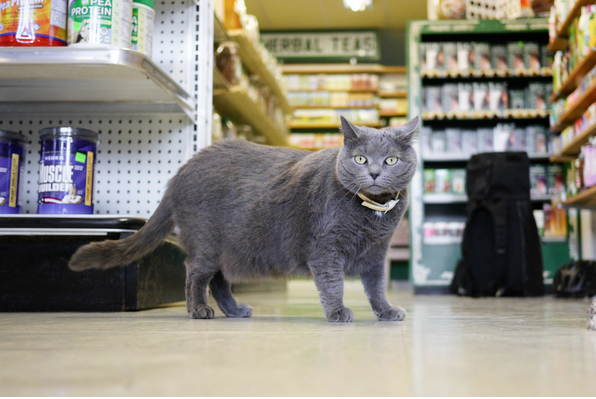Blog to Book: Brooklyn Cats Reveal Their Deepest Secrets in 'Felines of New York'