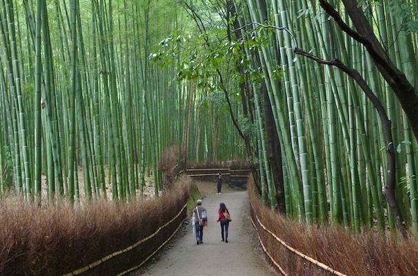Where Nature and Architecture Meet: The Arashiyama Bamboo Grove in Kyoto