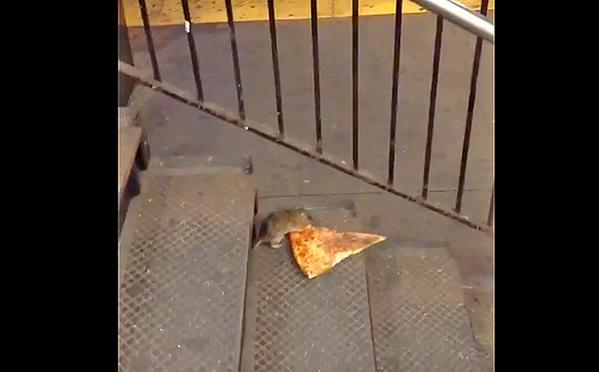 Pizza Rat Now Has Its Own Twitter Account