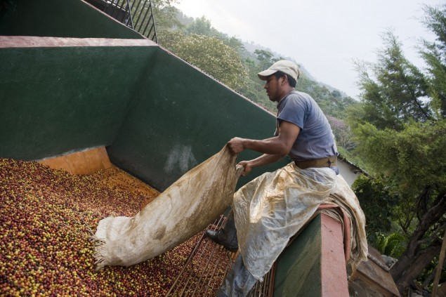 Central America's Slow Recovery From Coffee-Ravaging Epidemic