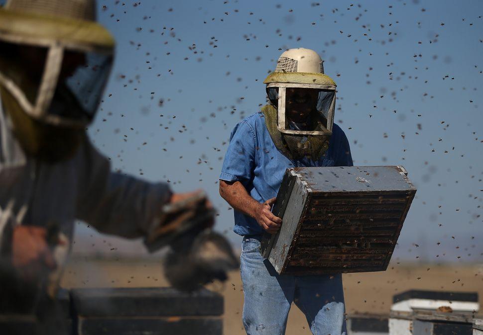 EarthJustice Uses Reddit AMA to Break Down Its Honeybee Victory