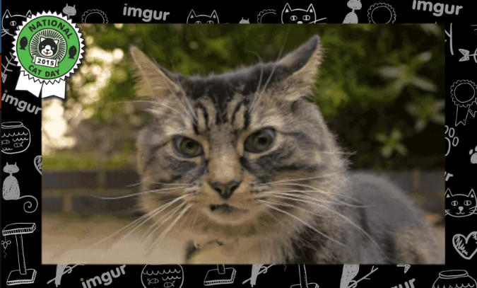 Cat Class 2015: Imgur Is Awarding Superlatives to the Year's Best Internet Cat Posts