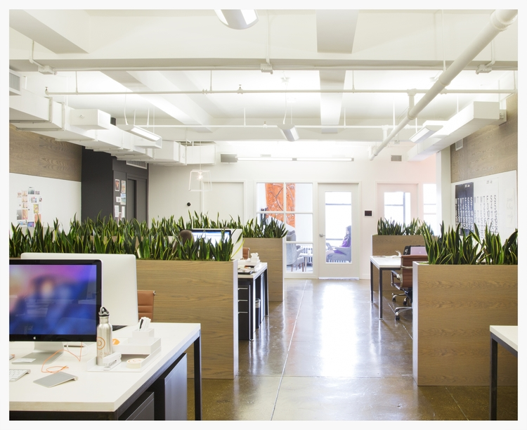Meet the Startup Designing Breathtaking Office Plant Displays for Tech Giants