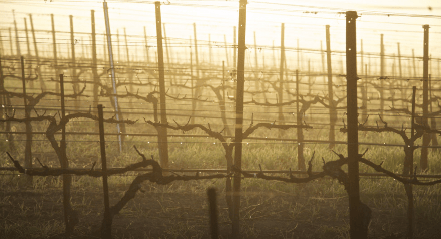 What Actually Happens in a Vineyard? This Series Followed a Season of Grape Growing
