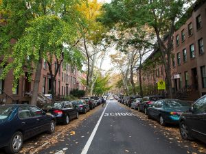 Brooklyn, brownstones, trees. (Kaitlyn Flannagan for Observer)