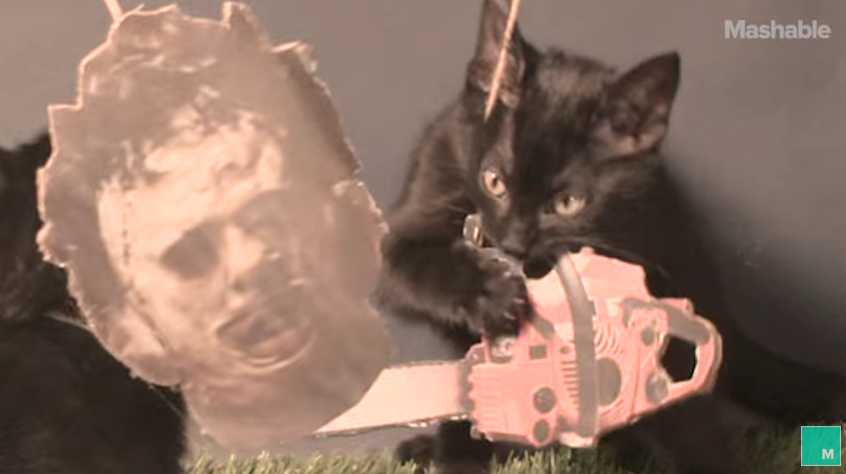 Watch Kittens Recreate Classic Horror Films in This Adorable Viral Video