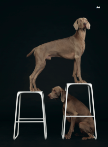 Another look at William Wegman's famous dogs (Photo: Courtesy Wallpaper*).