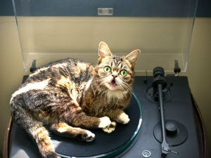 Bub: on the record. (Photo: Facebook)
