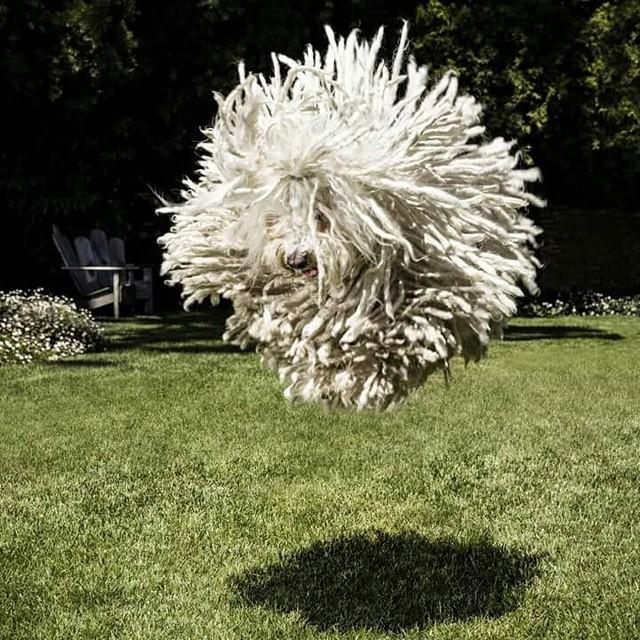 Mark Zuckerberg's Mop Dog Is the Subject of an Amazing Photoshop Battle