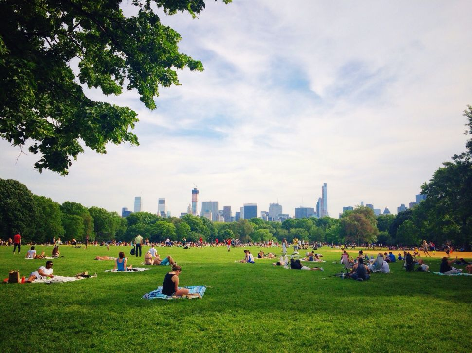 Afternoon Bulletin: City Parks Crime Stats Released, NYCHA Sandy Lawsuit and More