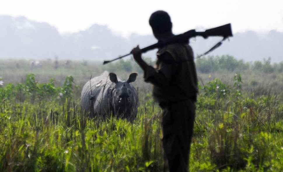 South African Decision to Lift Ban On Rhino Horn Sparks Heated Debate
