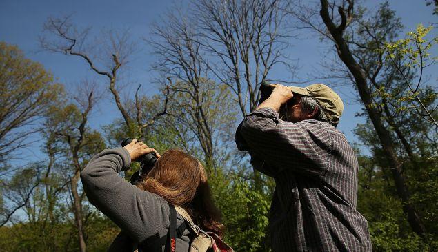 Bird watching in Prospect Park. (Photo: Spencer Platt/Getty Images)