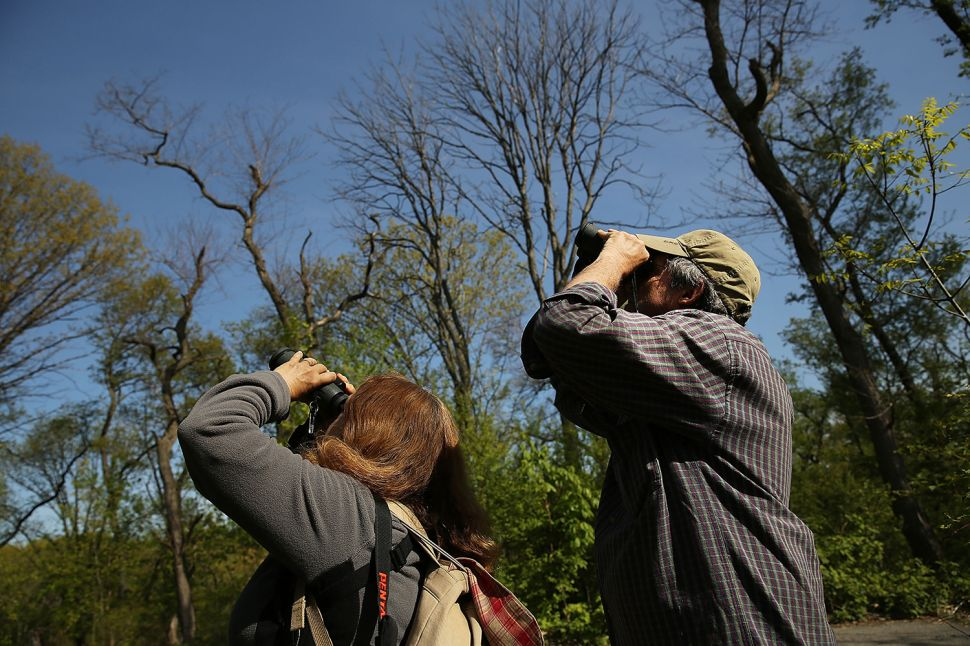 To Do This Weekend: Find the Painted Bunting in Prospect Park!