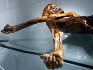 TO GO WITH AFP STORY BY PIERRE FEUILLY The mummy of an iceman named Otzi, discovered on 1991 in the Italian Schnal Valley glacier, is displayed at the Archaeological Museum of Bolzano on February 28, 2011 during an official presentation of the reconstrution. Visitors will get to see Iceman Oetzi under a new light starting on March 1 at the South Tyrol Museum of Archaeology in Bolzano, which celebrates the 20th anniversary of the mummy's discovery. Based on three-dimensional images of the mummy's skeleton as well as the latest forensic technology, a new model of the living Oetzi has been created by Dutch experts Alfons and Adrie Kennis. AFP PHOTO / Andrea Solero