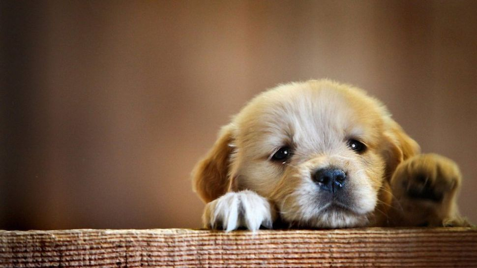 11 Adorable Dog GIFs to 'Aww' at This National Puppy Day