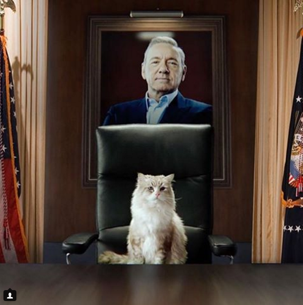 Social Download: Internet Responds to Viceland, 'House of Cards,' and O.J. Simpson