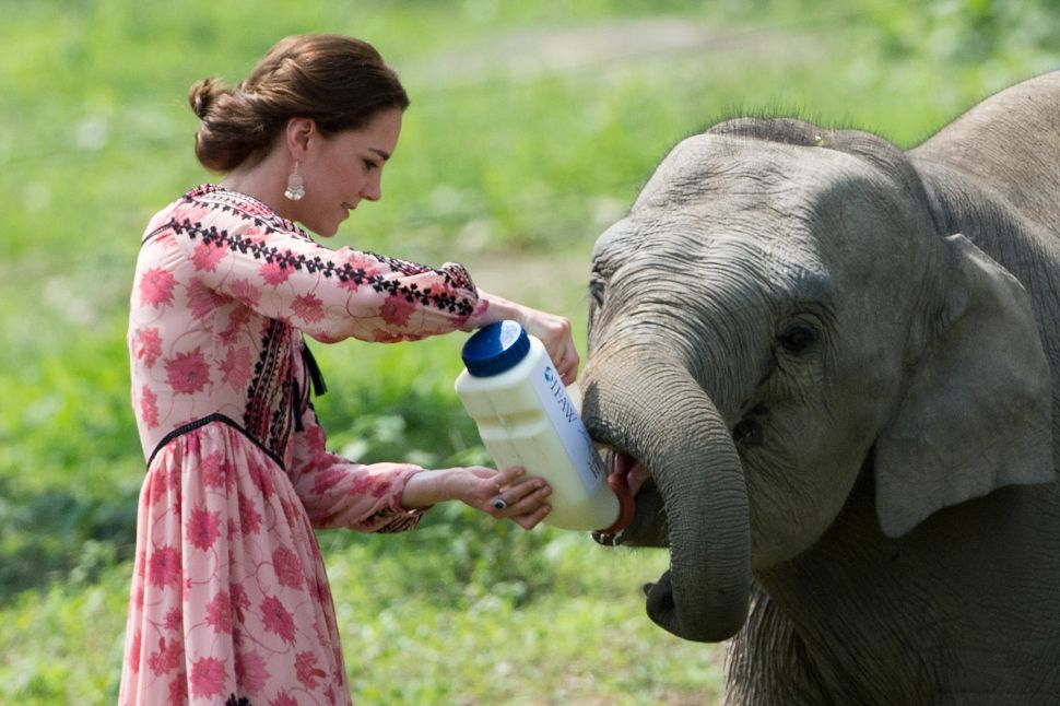 The Royal Tour of India Continues, This Time With Elephants