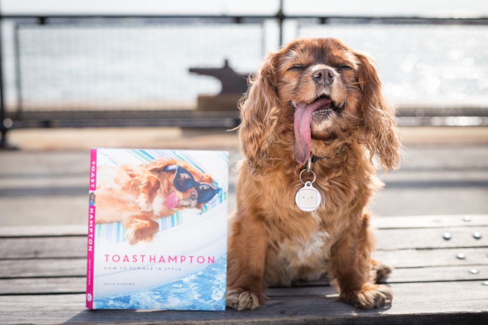 Tips From Toast on Making Your Dog a Social Media Superstar