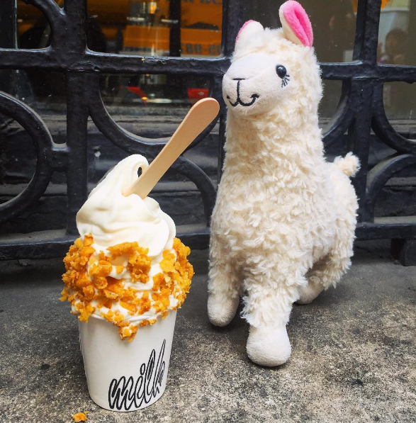 This Llama Leads an Enviable Jetset Life on Instagram