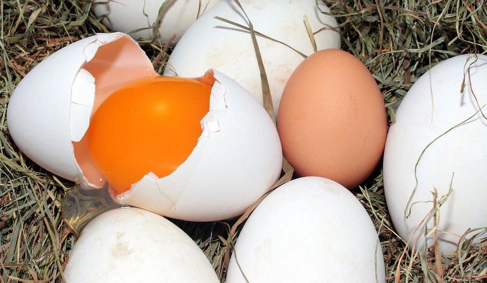 Your Cage-Free Eggs Are Bogus