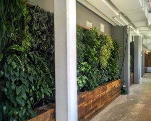 An example of the rainwater-fed greenery found throughout the workspace.