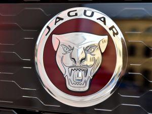 MUNICH, GERMANY - APRIL 14: The new Jaguar Logo is seen during the Jaguar presentation of the new Jaguar F-Pace at Jaguar & Landrover- Markenboutique Odeonsplatz on April 15, 2016 in Munich, Germany.