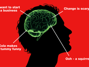 With apologies to any neurologists present. I may have mis-labeled the pre-frontal squirrel lobe.