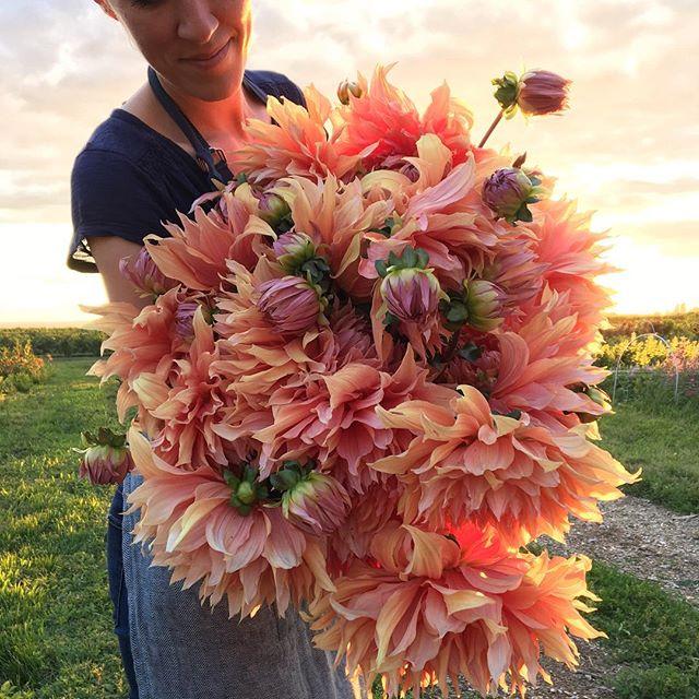 City Girl-Turned-Farmer Florist Erin Benzakein Is a Breath of Fresh Air