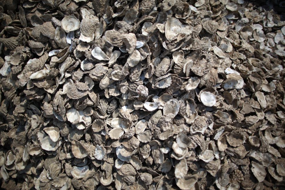How a Billion Oysters Are Set to Change New York's Harbor